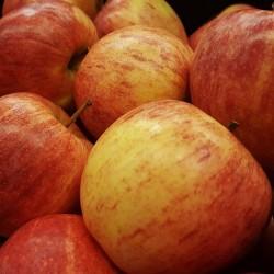 "Pommes ""Galla"" Pilat"