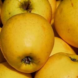"Pommes ""Golden"" Ardèche"