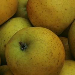 Pomme Chanteclerc