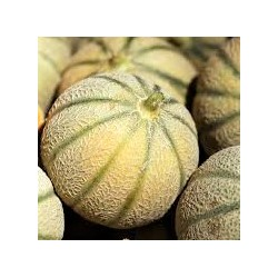 Melon Camargue